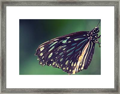 Dulce Alegria Framed Print by The Art Of Marilyn Ridoutt-Greene