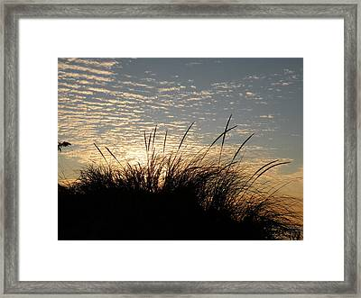 Dune Grass Framed Print by Donald Cameron