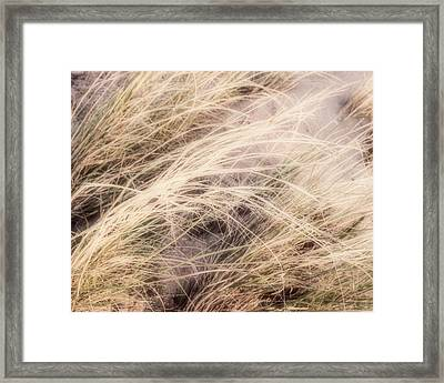 Dune Grass Nature Photography Framed Print by Ann Powell