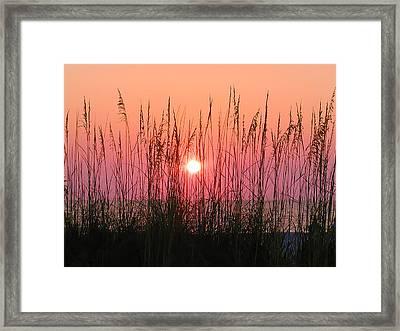 Dune Grass Sunset Framed Print by Bill Cannon