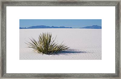 Framed Print featuring the photograph Dune Plant by Marie Leslie