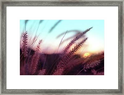 Framed Print featuring the photograph Dune Scape by Laura Fasulo