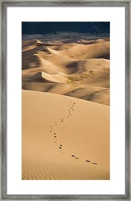 Dunefield Footprints Framed Print by Adam Pender