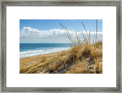 Dunes At Plum Island Framed Print