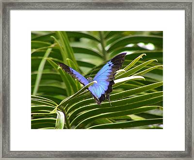 Dunk Butterfly Resting Framed Print by D Scott Fern