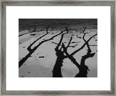 Dunk Island Australia 174 Framed Print