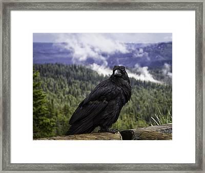 Dunraven Raven Framed Print by Elizabeth Eldridge