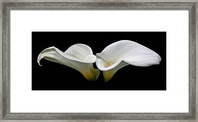 Duo Framed Print by Cathie Tyler