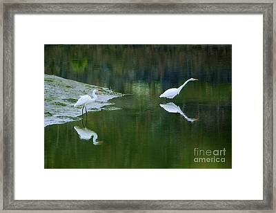 duo Framed Print by Sheila Ping