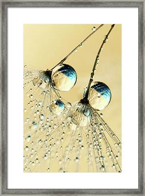 Framed Print featuring the photograph Duo Shower Dandy Drops by Sharon Johnstone