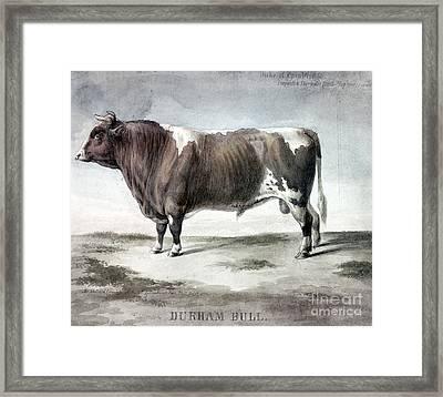 Durham Bull, 1856 Framed Print by Granger