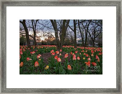 Framed Print featuring the photograph Dusk At Sherwood Gardens by Chris Scroggins