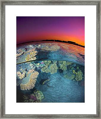 Dusk At The Red Sea Reef Framed Print by Henry Jager