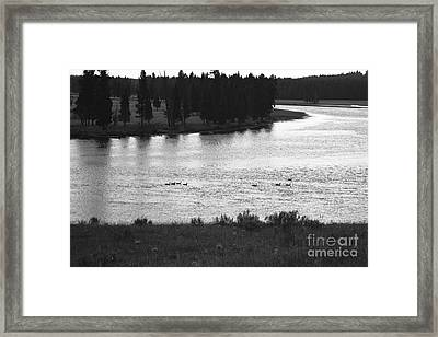 Dusk At The Yellowstone River Framed Print by Susan Chandler