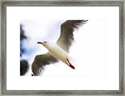Dusk Flight Framed Print by Jorgo Photography - Wall Art Gallery