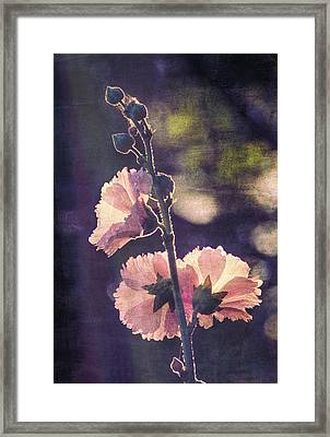 Dusk Light Framed Print by Ike Krieger