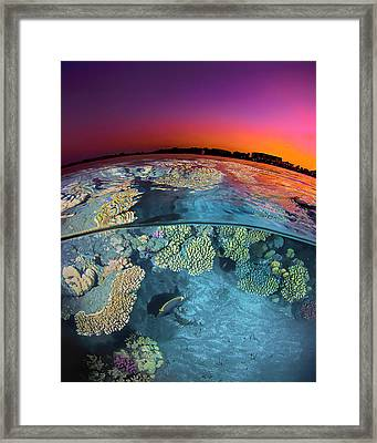 Dusk Over The Red Sea Reef Framed Print by Henry Jager