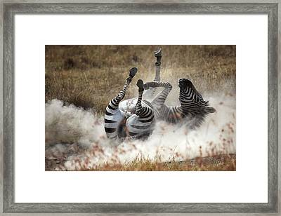 Dust Bath Framed Print by Michel Guyot