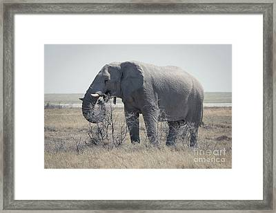 Dusty Elephant, Namibia Framed Print
