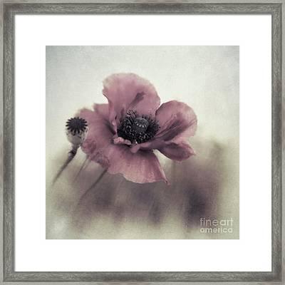 Dusty Pink Poppy Framed Print