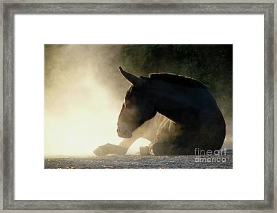 Dusty Roll Framed Print