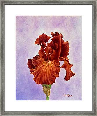 Dutch Chocolate Bearded Iris Framed Print