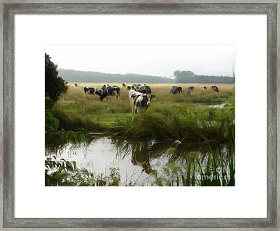Dutch Cows Framed Print by Jan Daniels