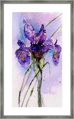 Dutch Iris Framed Print by Anne Duke