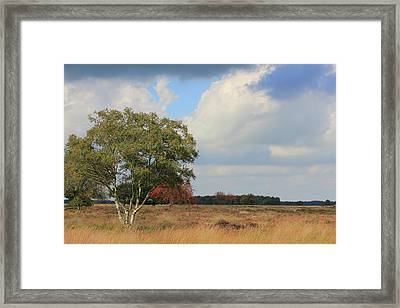 Dutch Landscape National Park Dwingelderveld Framed Print