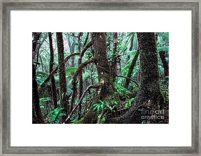 Dwarf Forest Mist El Yunque Framed Print by Thomas R Fletcher