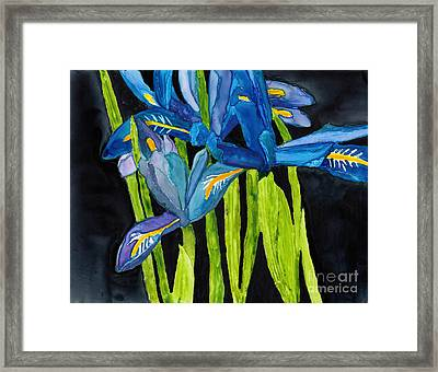 Dwarf Iris Watercolor On Yupo Framed Print