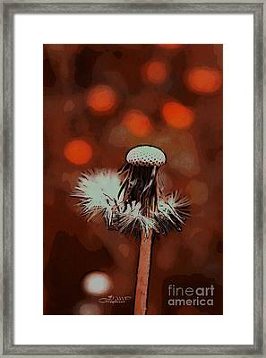 Dying Blowball Framed Print by Jutta Maria Pusl