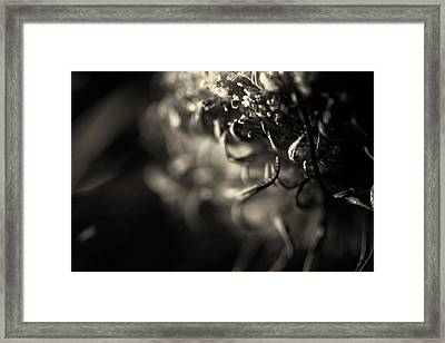 Faded Chrysanthemum Flower Abstract Print Framed Print