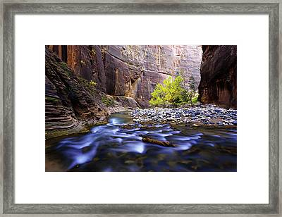 Dynamic Zion Framed Print by Chad Dutson