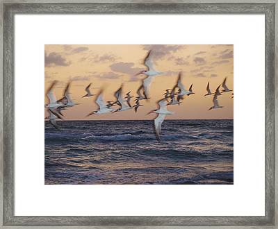 ''each Day A New Beginning''  Framed Print