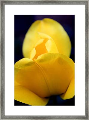 Each Petal Framed Print by Mark  France