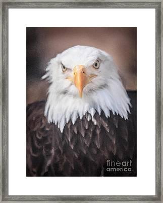 Eagle 01 Framed Print by David Millenheft