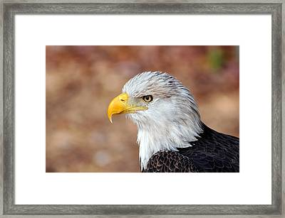 Eagle 10 Framed Print by Marty Koch
