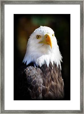 Eagle 14 Framed Print by Marty Koch