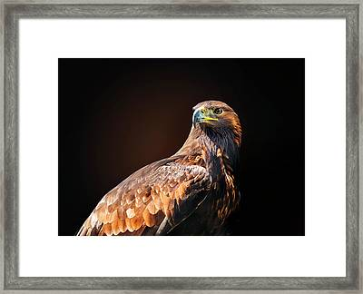 Eagle 2 Framed Print by Ivan Vukelic