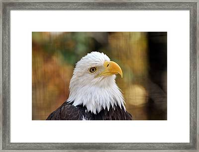 Eagle 6 Framed Print by Marty Koch