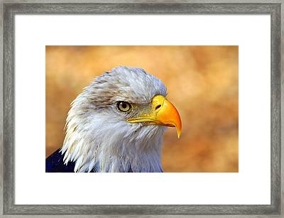 Eagle 7 Framed Print by Marty Koch