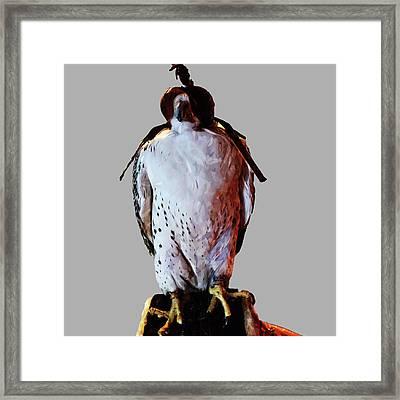 Eagle Framed Print by Abdulaziz Butaiban