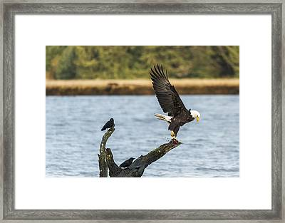Eagle Action Framed Print by Loree Johnson