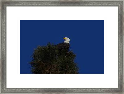 Eagle And A Clear Blue Sky Framed Print by Jeff Swan