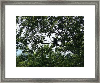 Eagle At Codorus Framed Print by Donald C Morgan