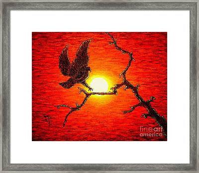 Eagle B2 Framed Print