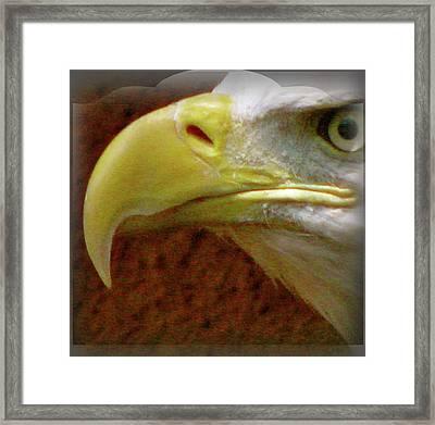 Eagle Beak Power Framed Print