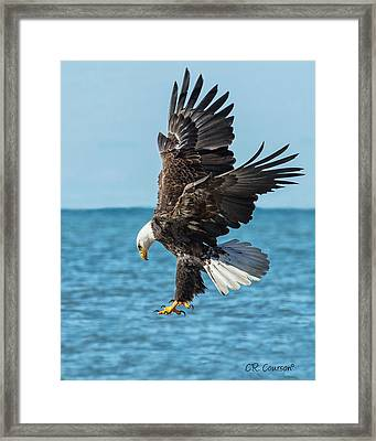 Eagle Dive Framed Print by CR  Courson