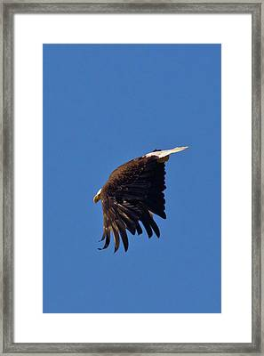 Framed Print featuring the photograph Eagle Dive by Linda Unger